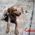 Cucciolo... cane simil da caccia lui è adorabile